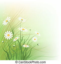 Chamomile - Decorative floral background with wild...