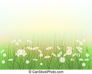 Chamomile 2 - Decorative floral background with wild...