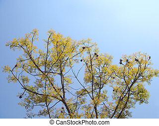 Mahogany against blue sky