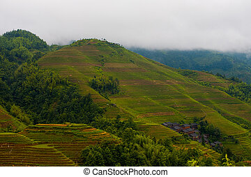 Rainy Steep Rice Terrace Mountain Longji