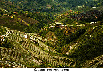 Steep Rice Terrace Mountain Longji Overcast - A steep set of...
