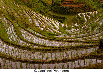 Down Steep Flooded Rice Terrace Longji