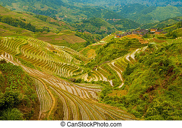 Flooded Rice Terrace Valley Traditional Village