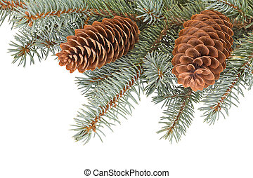 fir tree branches with pinecones on white background