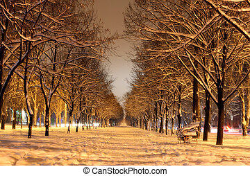 winter avenue at night