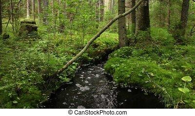 Black water in a creek wildlife - Black water in a creek,...
