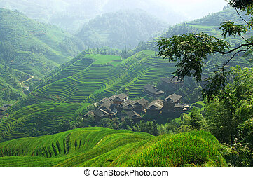 Green rice field in Guangxi province, China