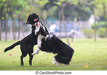 Dogs fighting on the lawn in the park