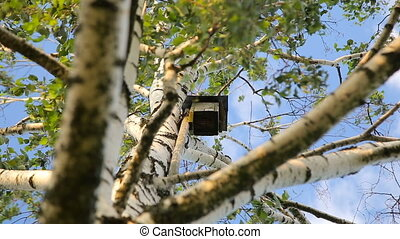 Birdhouse on a white birch tree over clear blue summer sky...