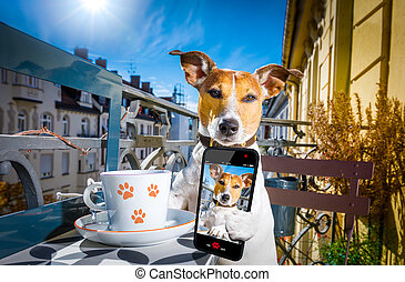 dog having a coffee break and selfie - jack russell dog...