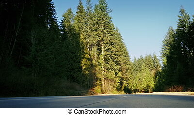 Moving Across Road In Afternoon Forest - Traveling over road...