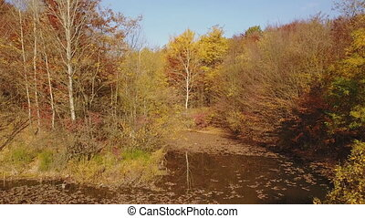 pond in the autumn forest - pond in the beautiful autumn...