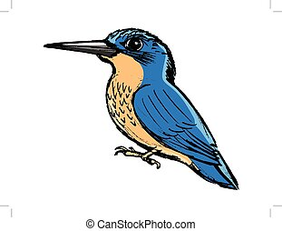 kingfisher, side view - vector, coloured, sketch, hand drawn...