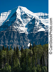 Tall green trees in front of Mt. Robson in BC, Canada