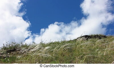 Nature - landscape 17 - Field of green grass and blue sky...