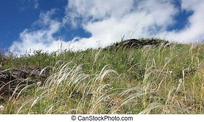 Nature - landscape 18 - Green leaf sway in the breeze in the...