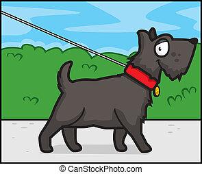 perro, ambulante