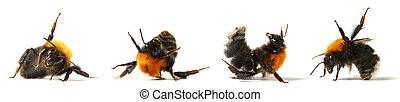 dance bumble bee - dance aerobic bumble bee isolated on...