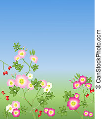 wild roses - an illustration of wild roses in various shades...