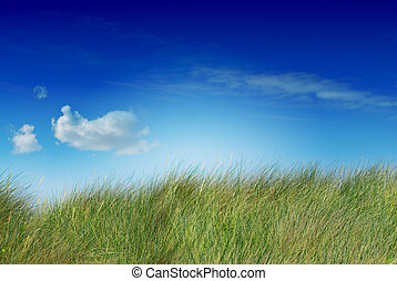 tall green grass blue sky and one cloud the image is saturated, the cloud is on the left side, the grass is uncutted