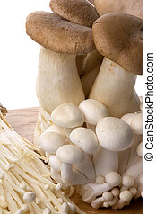 Mushrooms Isolated - Isolated image of a variety of...