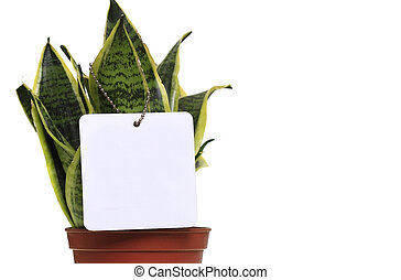 Potted plant with copy space - Potted plant isolated in...