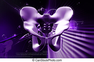 Pelvic girdle - Digital illustration of pelvic girdle in...