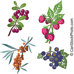 Berrys set 01 - Berrys set in color 01