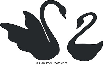 swan couple black 01 - swan couple in black 01