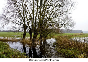 Moorland in northern Germany