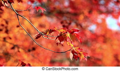 Autumn Foliage on a Lonely Branch