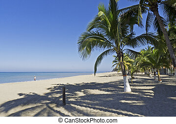 Beach on the Mexican Pacific Ocean - Beach with palm trees...