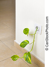 Green Power - Fresh green shoot growing out of an...