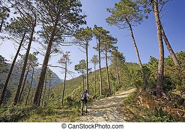 solitary trekking