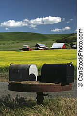 You've Got Mail - mailboxes in foreground, canola field and...
