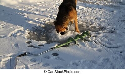 Dog on winter fishing