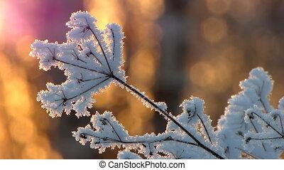 Winter 11 - Frozen grass.
