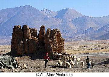 Landscape in Tibet - Sheep,relics of ancient castle and...