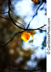lonely autumn leaf