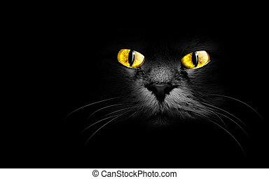 black cat - muzzle a black cat in the dark