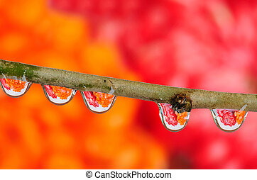 Early morning dew drops - Multiple dewdrops in a row macro...