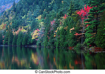Reflections of Maine Foliage - Autumn foliage reflected in...