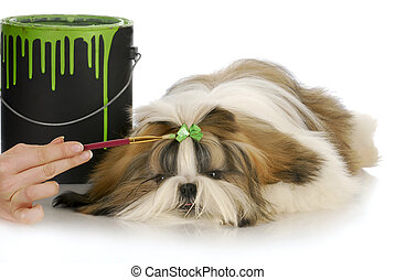 dog grooming - hand painting green bow on shih tzu hair with...