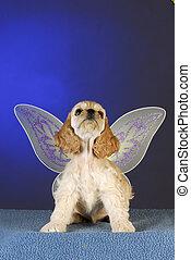 cocker spaniel puppy angel