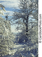 Winter forest in snow - Picture of beautiful winter forest...