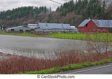 Flooded Dairy Farm - STANWOOD, WA – DECEMBER 14: - Flood...