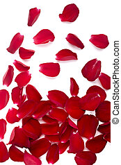 petals rose flower nature love - close up of rose petals on...