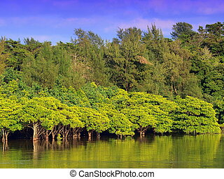 Mangroves look beautiful on a sunny day