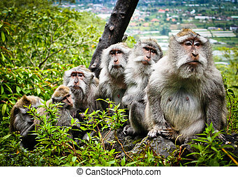 Monkey family - A monkey family standing on a tree