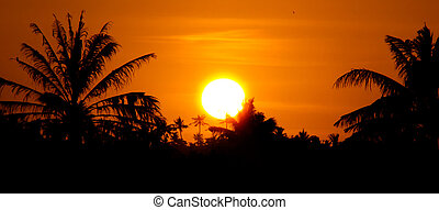 Palm tree sunset - Warm sunset in the palm trees